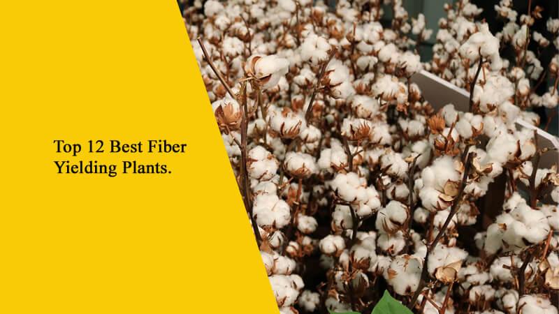 Top 12 Best Fiber Yielding Plants