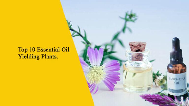 Top 10 Essential Oil Yielding Plants