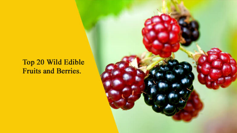 Top 20 Wild Edible Fruits and Berries