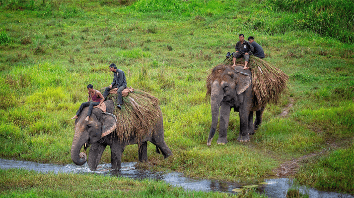 Chitwan National Park which is located in Province 3 of Nepal