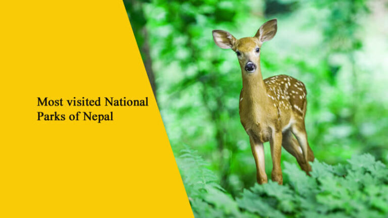 Top 10 Most Visited National Parks in Nepal