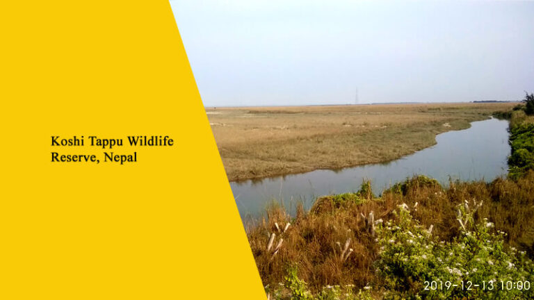 Koshi Tappu Wildlife Reserve, Nepal