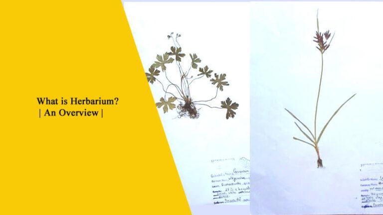 What is Herbarium?