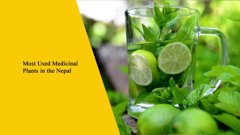 Top 50+ Medicinal Plants of Nepal