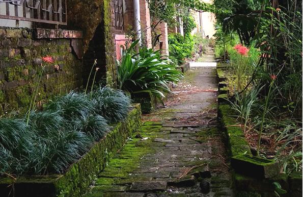 Botanical garden of Tri-Chandra College.